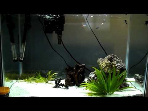 Feeding My 5 Neon Tetras, Angelfish, And My Chinese Algae Eater