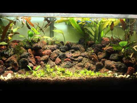 Quick update on the 15 gallon experiment tank.
