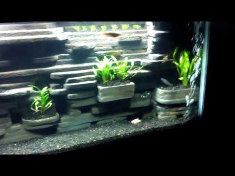 55 gal aquarium diy 3D background