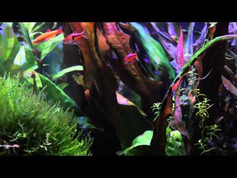 50 Gallon aquarium update