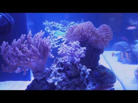 My 82g Reef - 6/20/14 Update
