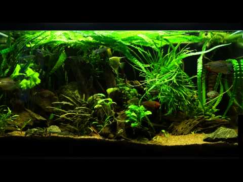 275 liter community aquarium 25/10 2014