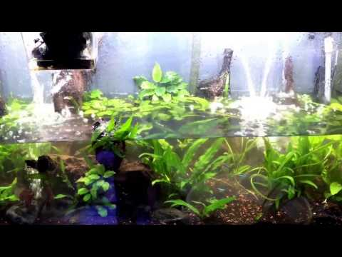 Freshwater Planted Aquarium Low Tech