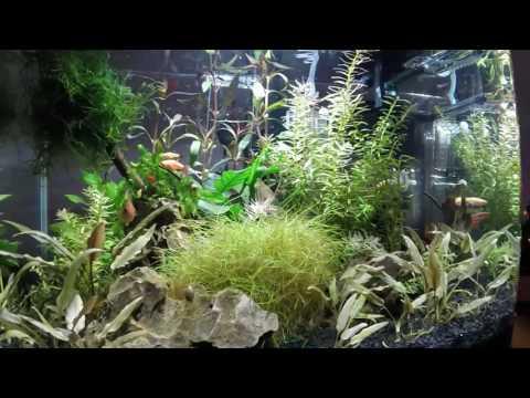 Nano Tank Aquascape Planted Aquarium