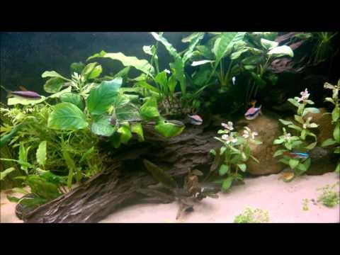 Planted Tank Rescape
