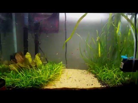 20 Gallon Planted Aquarium Aquascape