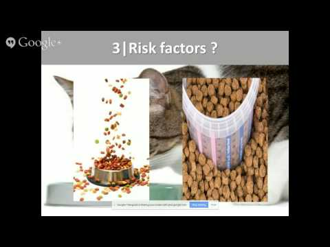Episode I : Obesity in cats