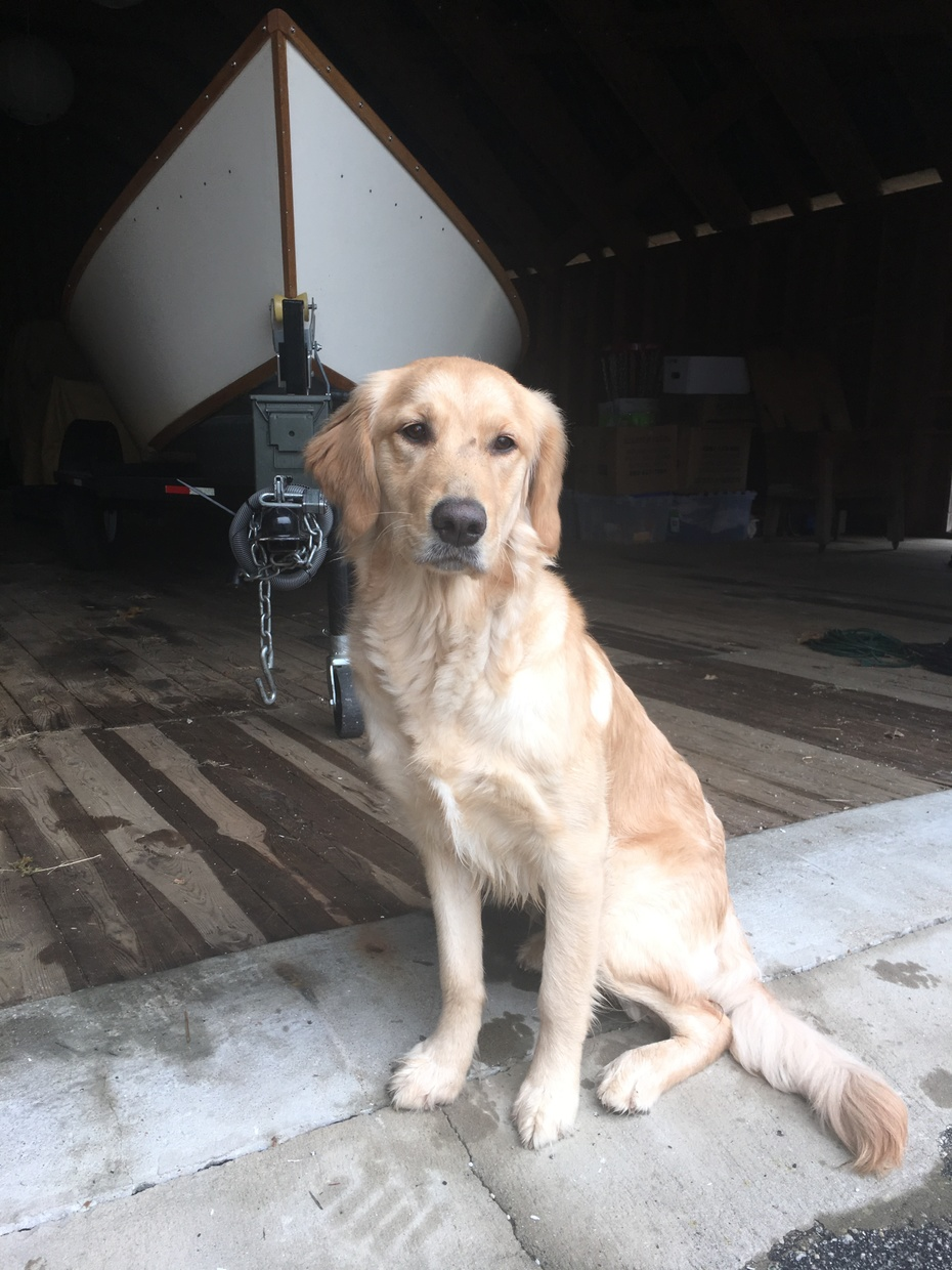 Goldens and drift boats