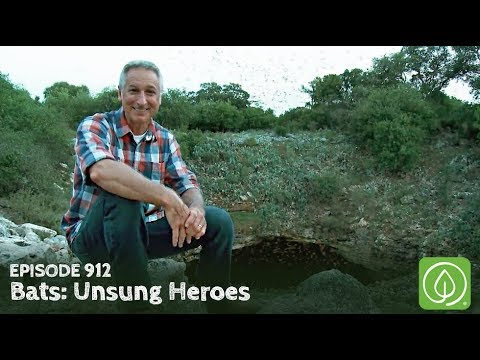 Growing a Greener World Episode 912: Bats - Unsung Heroes