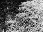 Frost at Yew Lake #3