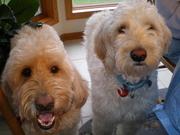 Kathy (Ellie & Oliver)