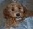 Liz & Chloe Pup