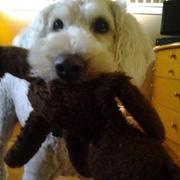 jessica (Rufus)