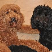 Ruth & Theo & Rudy