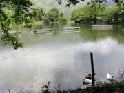 lago con jaulas  de la cooperativa en la finca la elvira