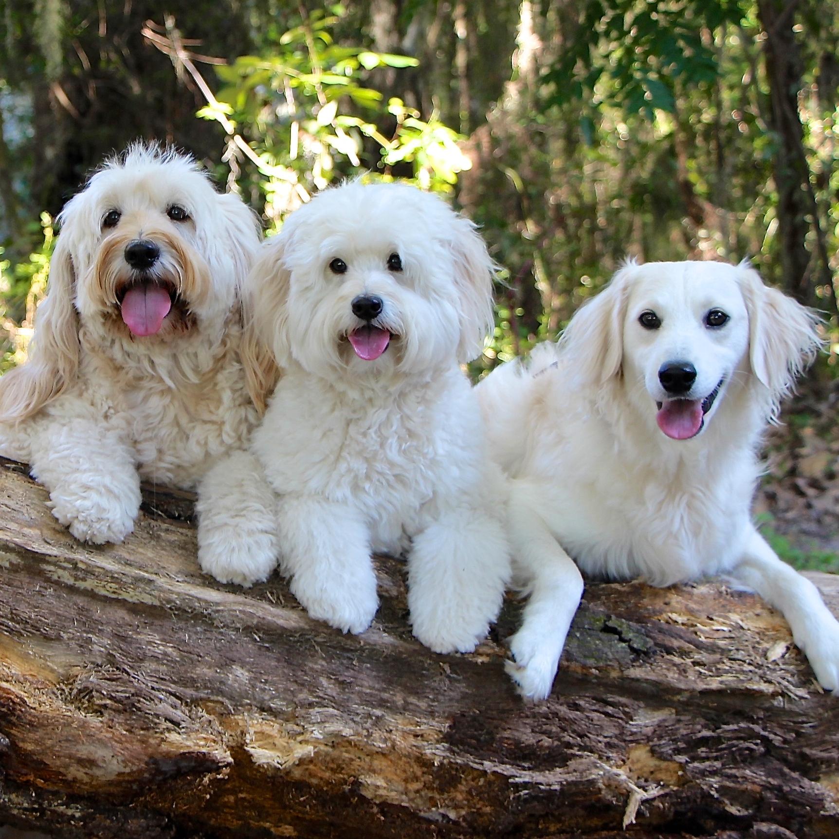 Lori, Daphne, Lucy & Pippa
