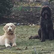 Lori, Quincy & Frankie