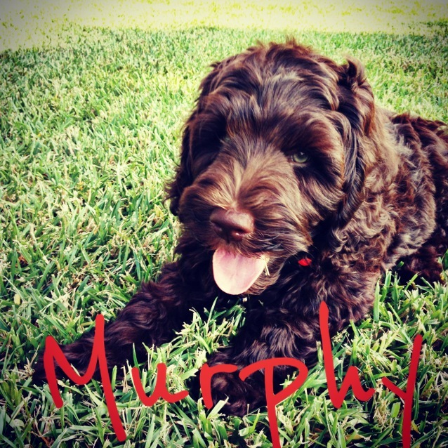 Murphys Mom