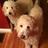 Julie, Eloise & Beasley
