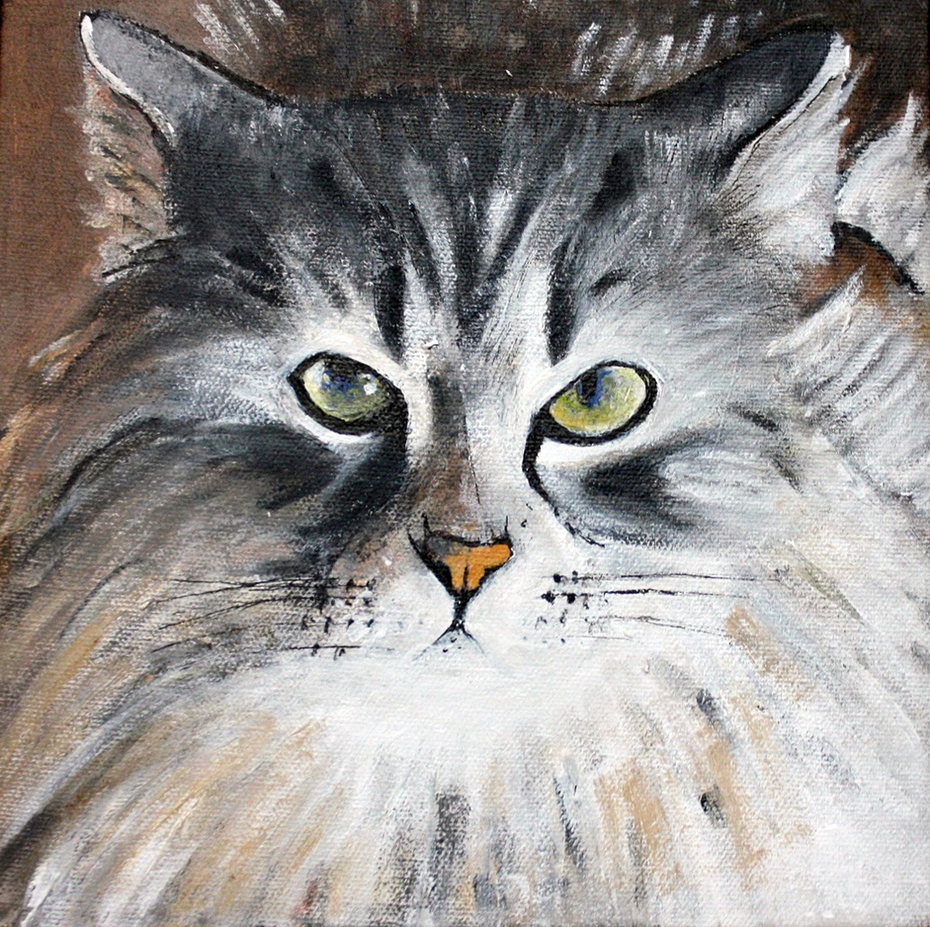 Siberian Forest Cat 2017