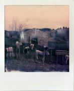 rurale1