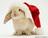 Christmas Bunny!