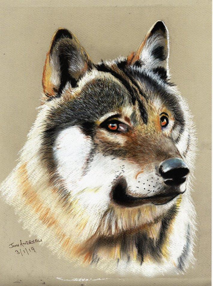 A Watchful Wolf