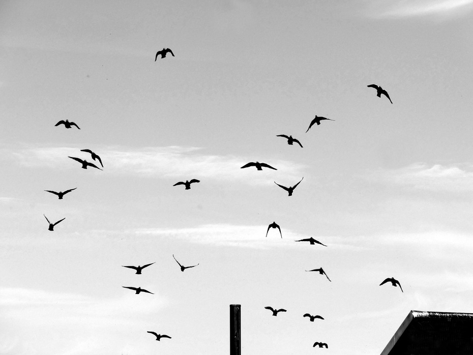 stormi d'uccelli neri, com'esuli pensieri, nel vespero migrar.