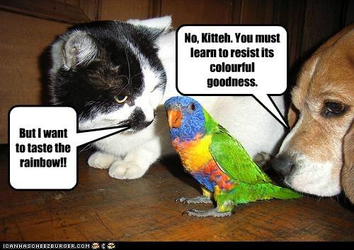 Don't kill Bird