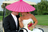 Rain Wedding & Event Planning