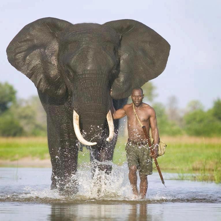 Steve Natureman Safari