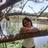 sandra pontes vieira silva(Presb