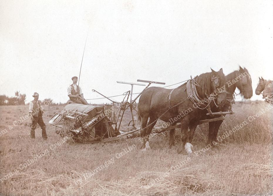 Hornsey Horse Drawn Haymaking, c1900