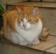 Pingo Cat