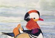 Manderin Duck