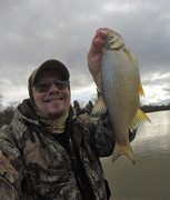 Big Golden Shiners in the Mix