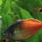 PaducahFishFan