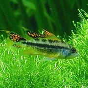 Jono G aquari