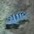 thefisherman15