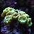 Josh the reef noob
