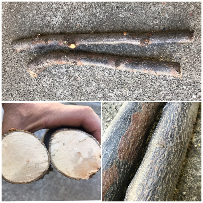 Free Wood fell off a truck...