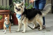 Special Dog Walking
