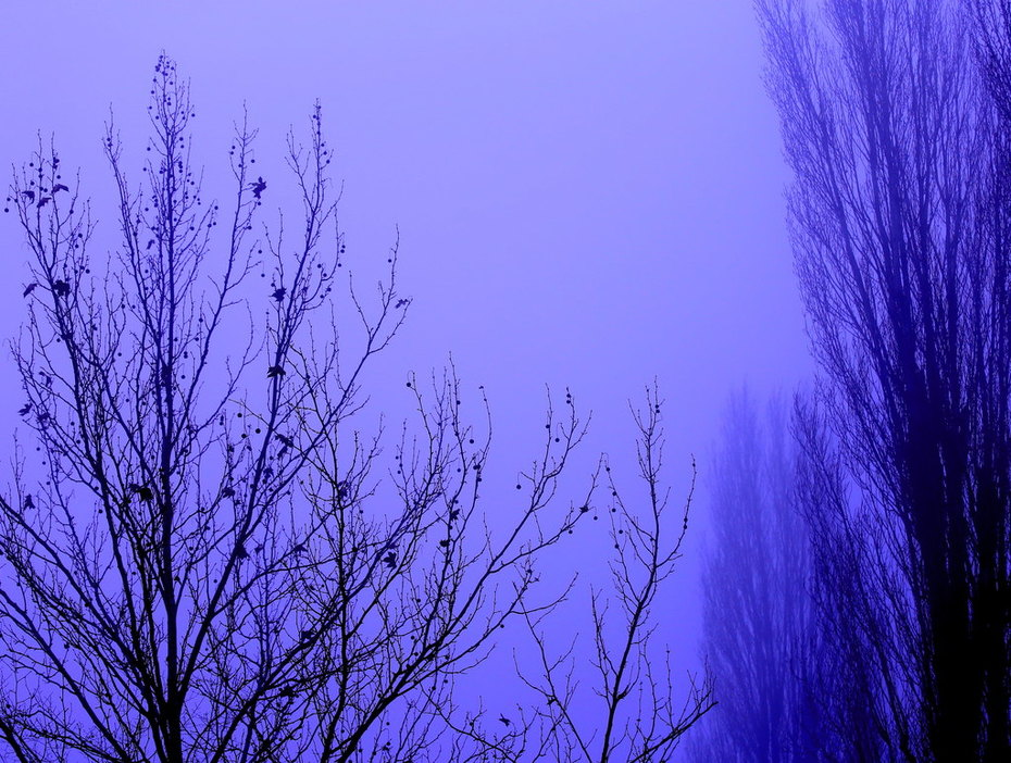 Effetto Nebbia