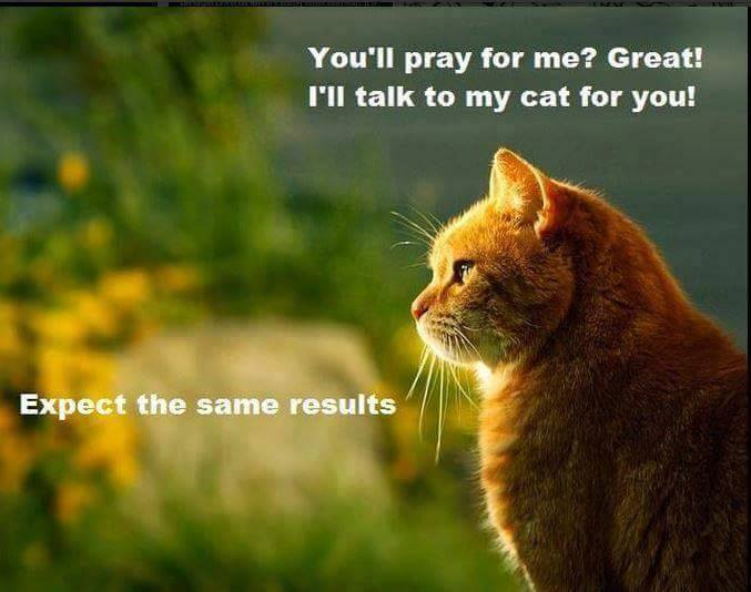 You'll pray for me? Great! I'll talk to my cat for you! Expect the same results.