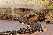 Get best Serengeti National Park Safari Tanzania