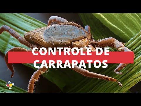 Cuidados para controle de carrapatos - Parte 2 | Programa Terra Sul
