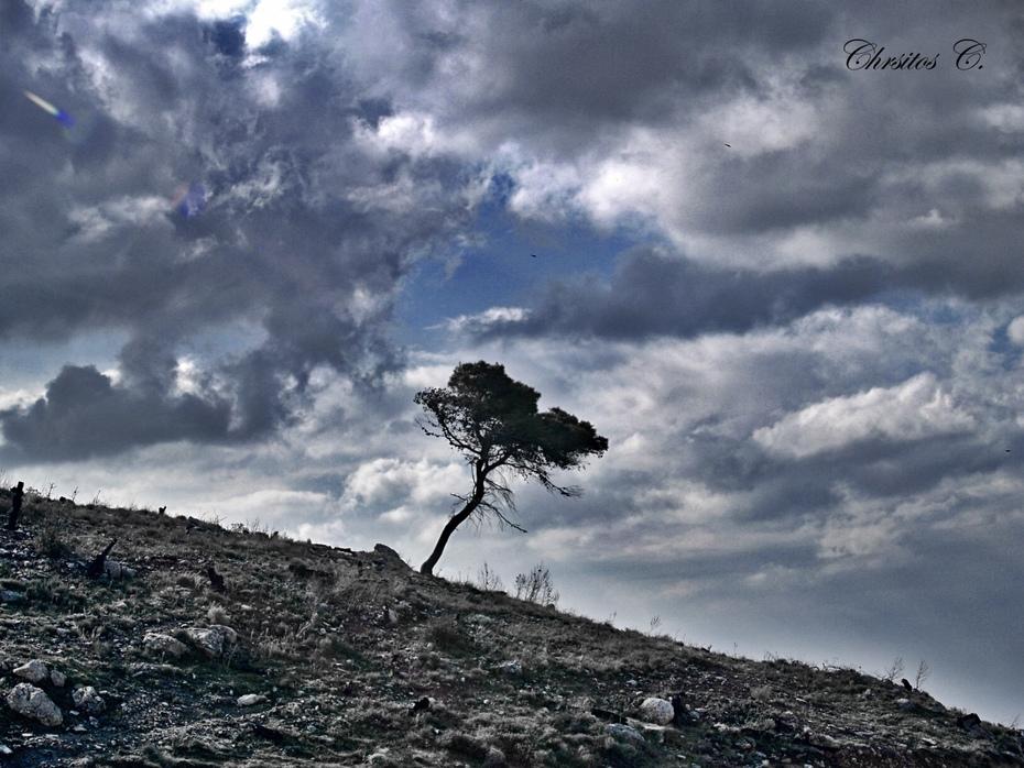 Το μοναχικό δέντρο...