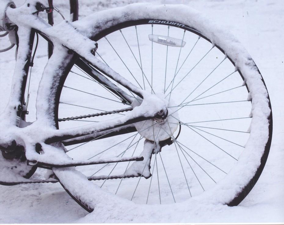 SnowCicle
