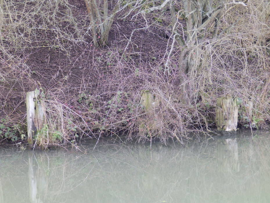 CANAL UNLOADING WHARF.
