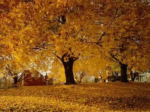 Doris Day - Autumn Leaves - 1956
